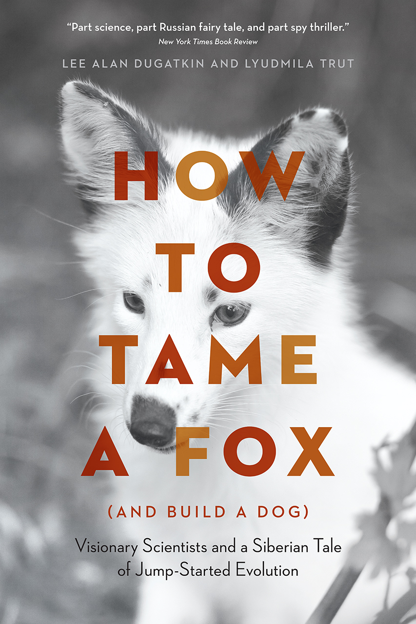How to tame a fox - image